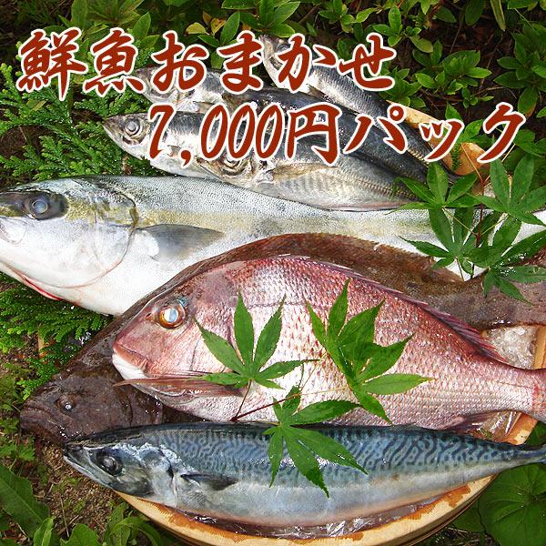 【鮮魚通販】能登・輪島の鮮魚7000円パック+1000円(ウロコ・内臓取り)