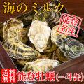 【牡蠣通販】能登牡蠣(牡蠣殻付き・一斗缶)