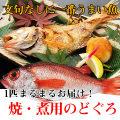 【鮮魚通販】のどぐろ(小サイズ約180g〜200g・焼き用)