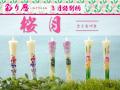 特別柄【彩り暦】3月【桜月】6本入り/送料無料
