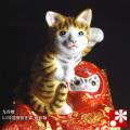 達磨招き猫(左手) 金彩釉(WAZAHONPO-41717)