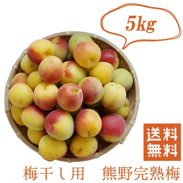 熊野有機生完熟梅(生梅) 梅干し作り専用の生梅(産直品) 5kg【冷蔵配送料無料】