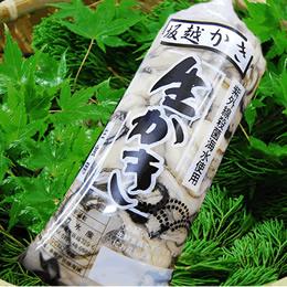 播州赤穂坂越湾産最高級牡蠣 剥き身牡蠣500g×3 |送料別