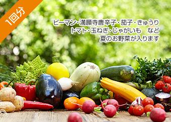 野菜セットお試し