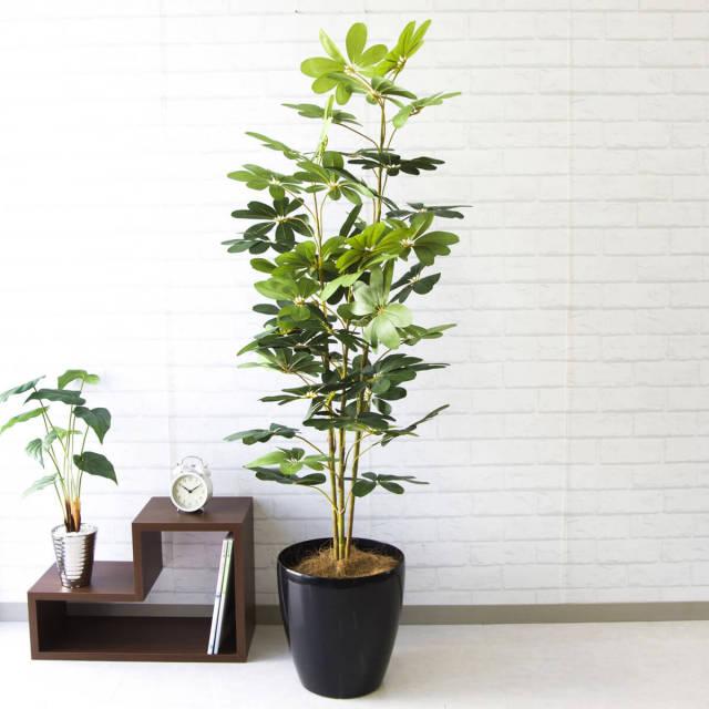 【PG106 シェフレラ H150cm / ポリプロピレン鉢】人工観葉植物 造花 フェイクグリーンインテリア アーティフィシャルグリーン