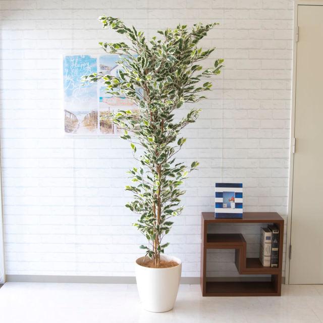 【PG138 フィカスベンジャミン H約180cm /ポリプロピレン鉢】人工観葉植物 造花 フェイクグリーンインテリア アーティフィシャルグリーン
