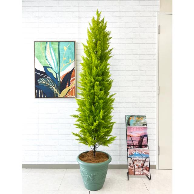 【PG139 ゴールドクレスト H約185cm /ポリプロピレン鉢】人工観葉植物 造花 フェイクグリーンインテリア アーティフィシャルグリーン