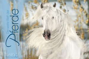 BOISELLE カレンダー2018 Panorama Pferde(パノラマフェアデ)