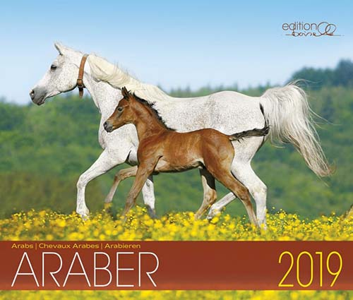 BOISELLE カレンダー2019 Mサイズ Araber(アラビアン)