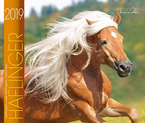 BOISELLE カレンダー2019 Mサイズ Haflinger (ハフリンガー)