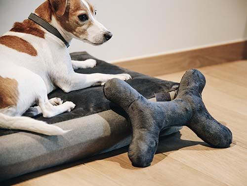 KENTUCKY Dog Toy