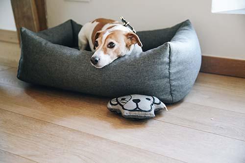 KENTUCKY Dog Bed Soft Sleep