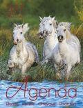 BOISELLE カレンダー2017 AGENDA(アジェンダ)