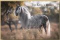 BOISELLE カレンダー2020  スペシャル  Kings Horses (キングホース)