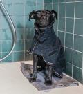 KENTUCKYDog Coat Towel