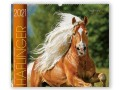BOISELLE カレンダー2021 Mサイズ Haflinger (ハフリンガー)