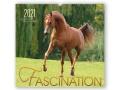 BOISELLE カレンダー2021 Lサイズ Fascination (ファシネーション)