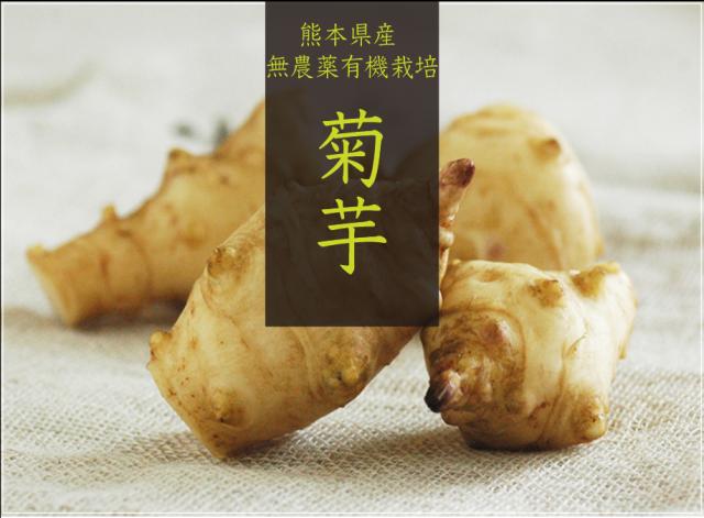 【予約販売のみ】熊本県産「菊芋」(生)※クール便でお届け【送料無料】