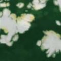 コットン強撚ニットプリント生地