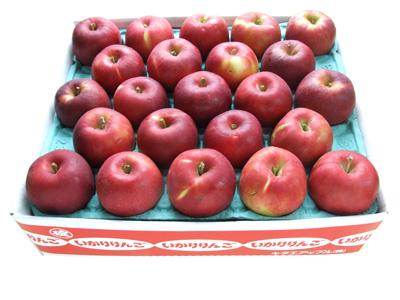 青森りんご紅玉料理23玉