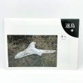 伊藤昭一撮影編集「迷鳥+ 8号 鳥が見つける」