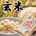 【感動の米】  福井産コシヒカリ玄米 5kg <残留農薬ゼロ>