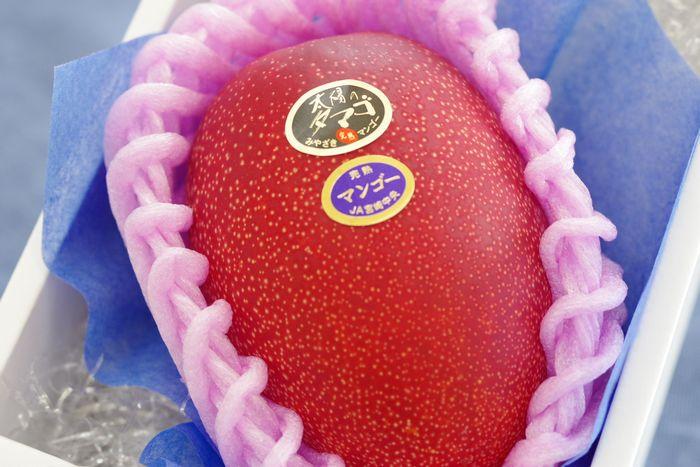 父の日マンゴーギフト通信販売 宮崎の太陽のたまごマンゴー糖度15度以上をお父さんにプレゼント。1玉入