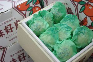味好鳥みかん(あじこうちょう)通販 お歳暮長崎みかんに 袋入 約15玉~約20玉