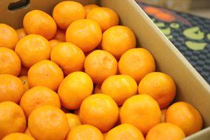 味ピカみかん通信販売 愛媛県川上共選の最上級をお歳暮愛媛みかんに 糖度約12・5度 約5kg