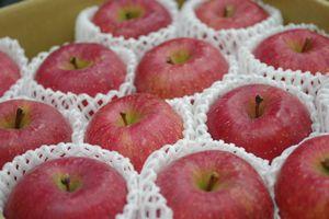 ふじりんご取寄販売 糖度約13度のサンふじりんごを通販で。約5kg 約14玉~約18玉 青森・他産地