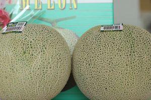 旭村アンデスメロンお取り寄せ販売 茨城産。糖度の見えるメロンを通販で。果物ギフトに 糖度16度 特秀 2玉