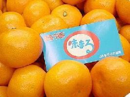 味まるみかん通販 お歳暮長崎西海蜜柑 糖度12度以上 5kg S〜L