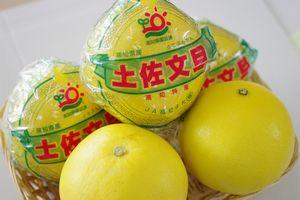 高知県宿毛だるま文旦通信販売 越冬完熟土佐ぶんたんを販売取寄。糖度11度以上 約5kg 約7玉〜約10玉 高知県産