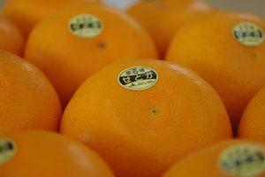 せとか通販 愛媛みかん大トロの異名をもつ柑橘を販売取寄。約4玉〜約7玉 愛媛県産