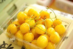 月山錦さくらんぼ通販。黄色い山形さくらんぼ販売。お中元ギフトに 500g バラ詰め 2L~3L