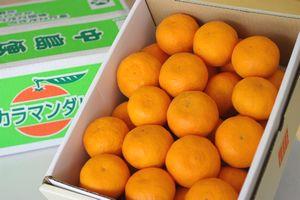 母の日カラマンダリンみかんギフト通販 愛媛産カラーオレンジをプレゼントに。カーネーション付き。糖度約13度 約3kg 愛媛・他産地