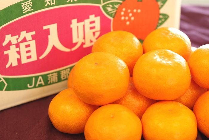 箱入娘みかん販売 愛知県蒲郡産 お歳暮みかん通販でお取り寄せ 糖度12度以上 5kg S~L
