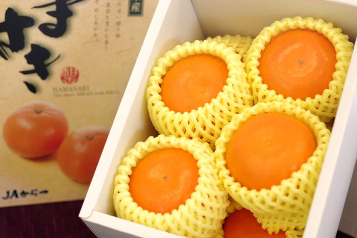 柑橘はまさき通販 佐賀オリジナルの麗紅柑を販売取寄。約4玉〜約8玉 佐賀県産