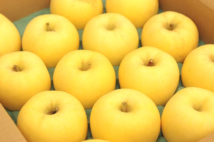 はるかりんごお歳暮ギフト通信販売 岩手県産 はるか林檎お取り寄せ 糖度14度以上 5kg 約14玉~約18玉