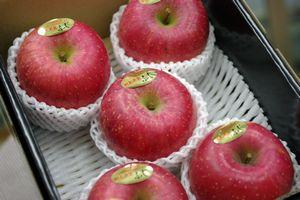 樹上完熟ふじりんご通販 東根市お歳暮サンふじりんご糖度約14度を販売取寄。小箱 約5~約6玉 山形県東根市産