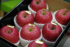 樹上完熟ふじりんご通信販売 東根市お歳暮サンふじりんご糖度約14度を販売取寄。中箱 約7~約9玉 山形県東根市産