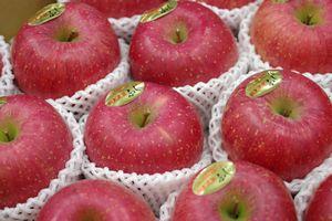 樹上完熟ふじりんご取寄販売 東根市お歳暮サンふじりんご糖度約14度を通販で。約5kg 約14玉~約20玉 山形県東根市産