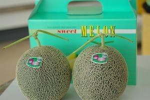 肥後グリーンメロン通信販売 熊本産。販売取寄!果肉は緑色の熊本メロン 2玉