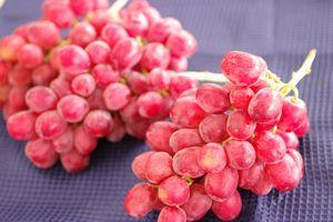 甲斐路ぶどう(かいじ)葡萄通販 糖度の高い別名赤いマスカットを販売取寄。1房 約500g