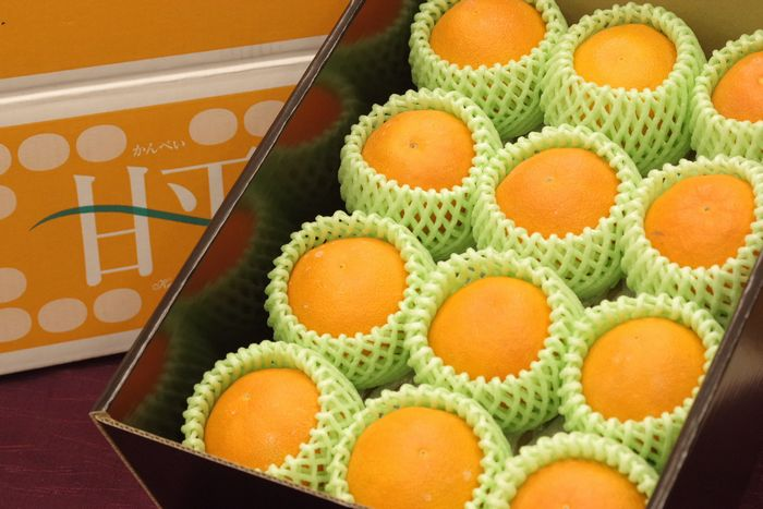 M~L小さめサイズ 甘平(かんぺい)通販 愛媛産プチプチした食感が特徴の柑橘を販売取寄。約12玉前後 愛媛産