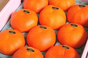 甘平(かんぺい)通信販売 愛媛産プチプチした食感が特徴の柑橘を販売取寄。約8玉〜約15玉 愛媛産