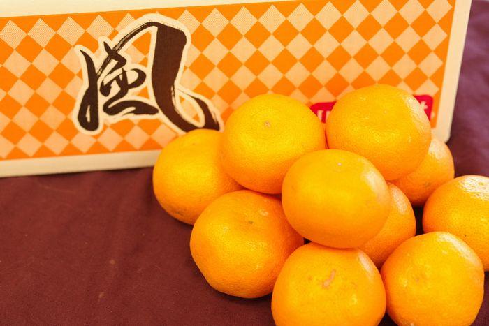 風みかん通信販売 愛媛県川上共選ブランドをお歳暮愛媛みかんに 糖度約12度 約5kg