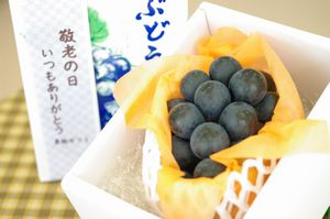 敬老の日ナガノパープル葡萄ギフト通販 おじいちゃん・おばあちゃんに果物プレゼント。1房 長野産