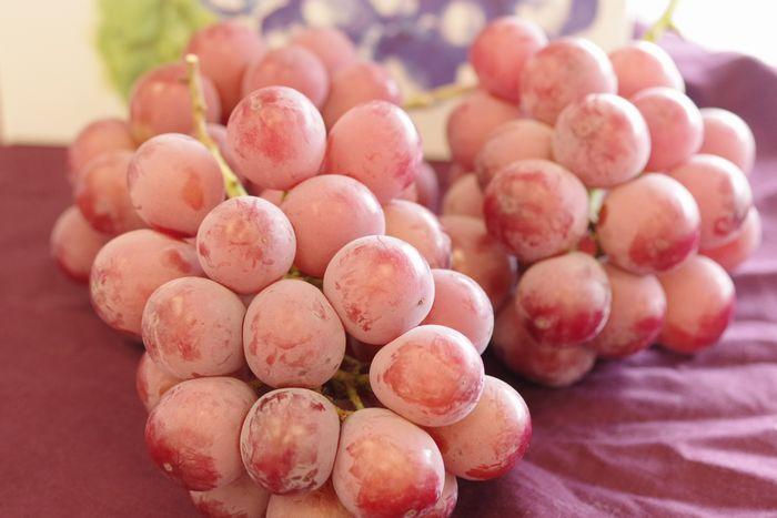 クイーンニーナ葡萄取寄販売 大粒で種が無く高糖度な赤色系ぶどうを通販で。 3房 山梨・他産地