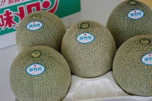 タカミメロンお取り寄せ販売 熊本産。通販で熊本貴味メロンを。果物ギフトに 約5k 4玉〜5玉